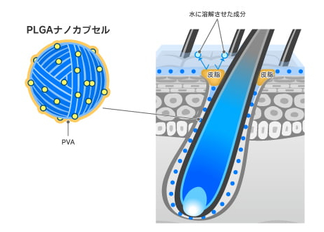 PLGAナノカプセルのイメージ