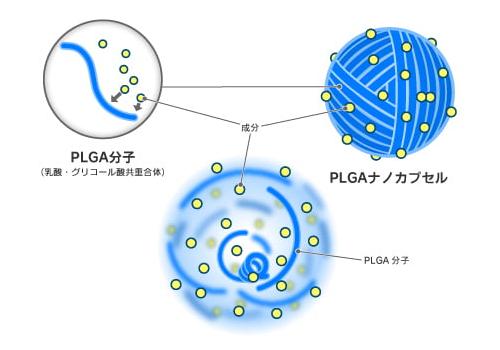 PLGAナノカプセルの構造イメージ