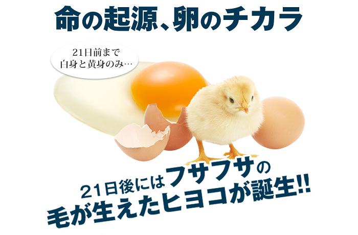 命の起源、卵のチカラ。21日後にはフサフサの毛が生えたヒヨコが誕生!
