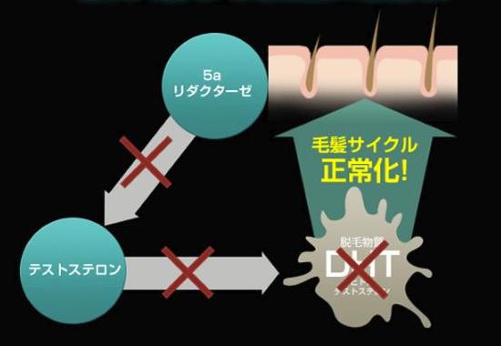 ペブプロミンαの作用。5αリダクターゼを阻害してテストステロンとの結合を防ぎ、DHT(ジヒドロテストステロン)の生成を抑える。