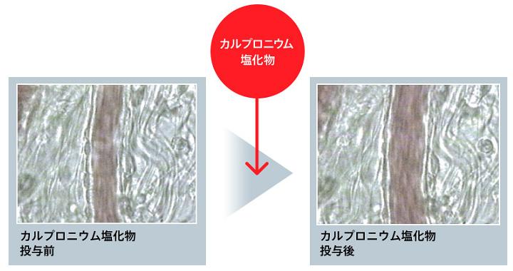 カルプロニウム塩化物の育毛効果(カルプロニウム塩化投与前と投与後の血行を比較)